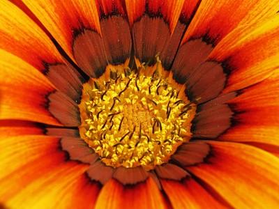 In The Haert Of Flower