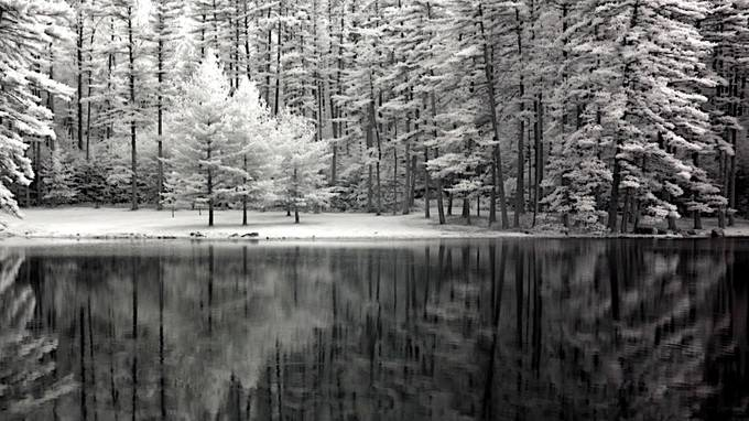 Pine Reflections by kensilagy - High Contrast In Black and White Photo Contest