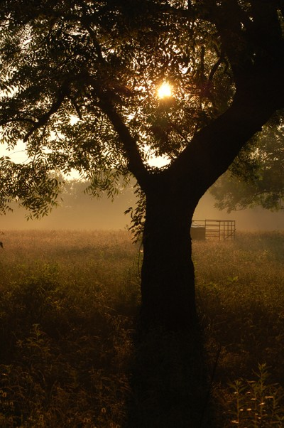 Morning Fog on the Farm