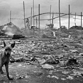 I captured this scene at a dumpsite near the bay. I dog wanders a round possibly searching for food, probably asking, what has man done?