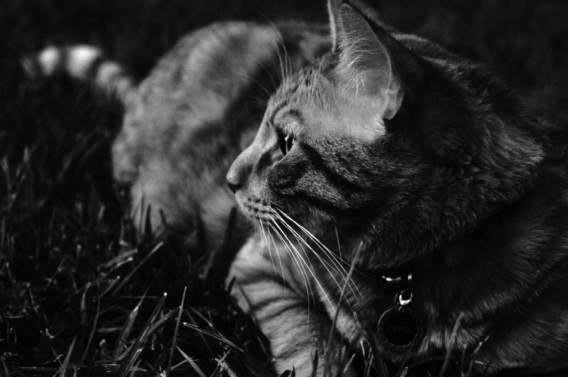 Coopers B&W