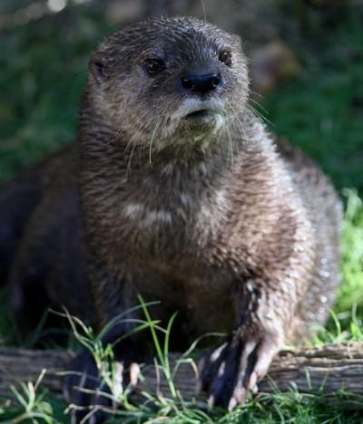 Otterly handsome