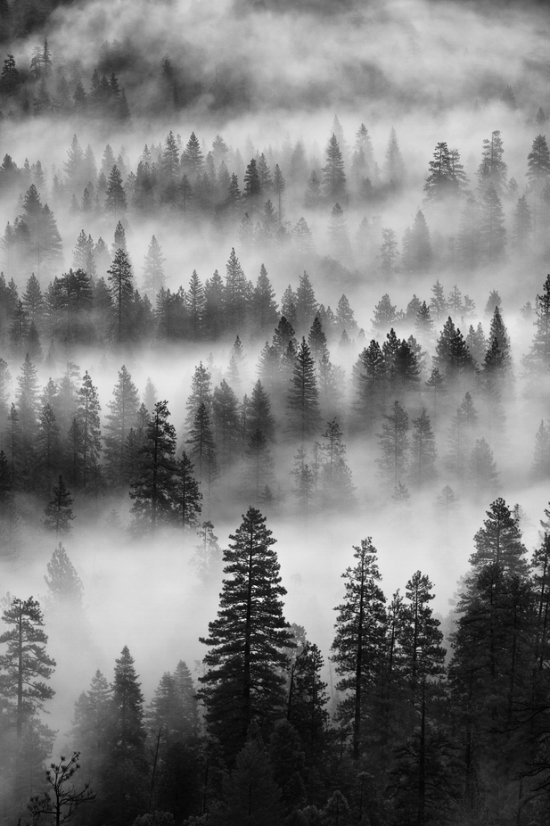 Waves of trees captured at Yosemite National Park