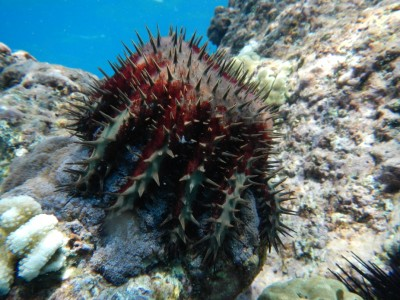 underwater camera koloko fishponds 013
