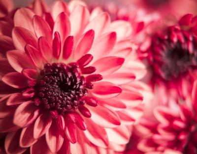 Pretty in Pink (8x10)