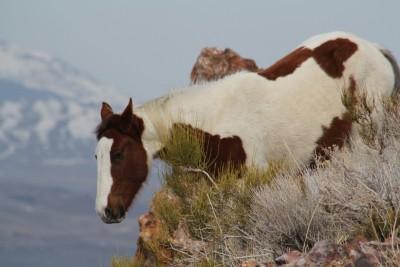 horses, horses, horses 537