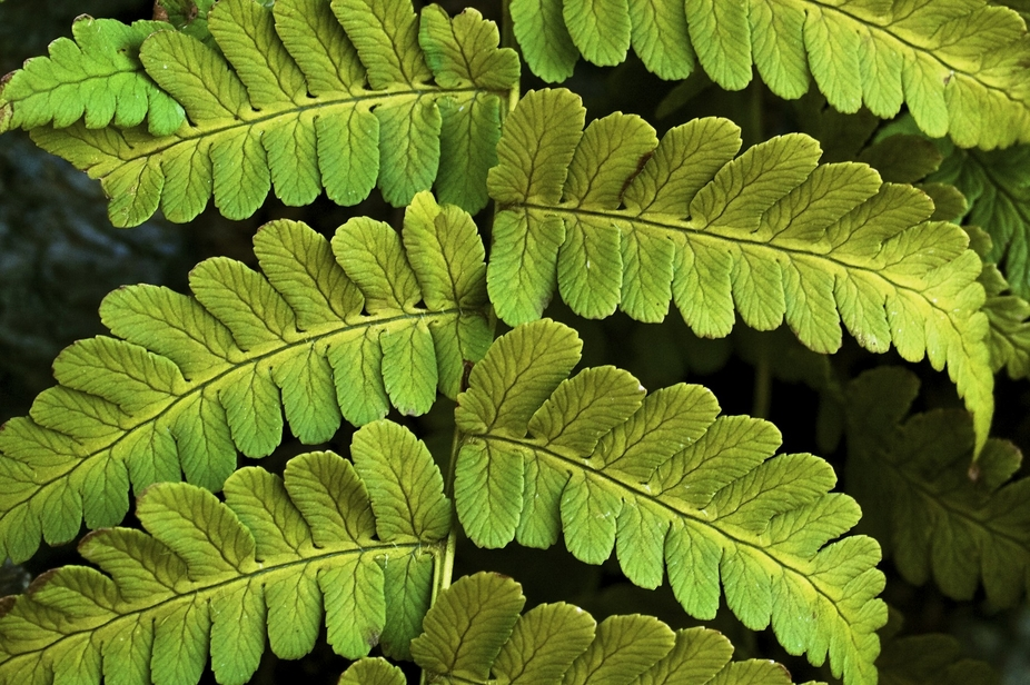 The detail with in the leaves with the veins make this a stunning plant.