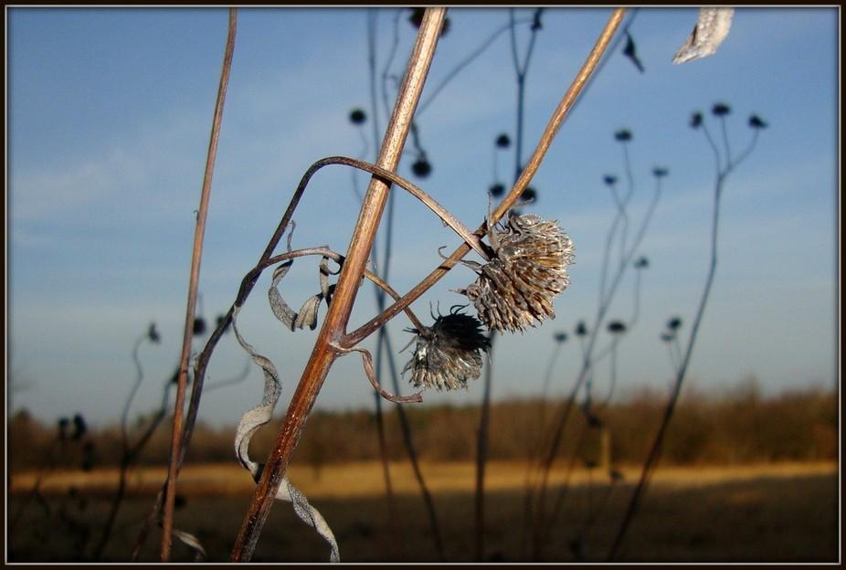 December prairie plant