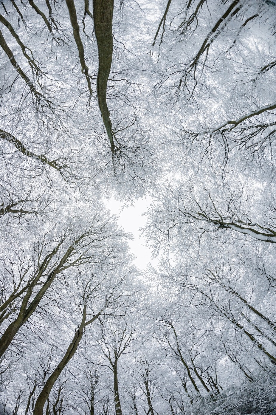 After the Snow by pnewbery - Your Point Of View Photo Contest