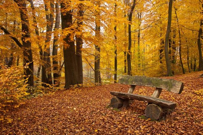 Sit With Me by bitterer - Rule Of Thirds In Nature Photo Contest