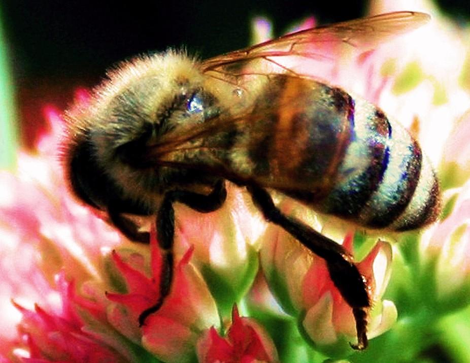 beeon flower