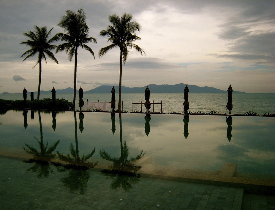 Coconut trees in Kho Samui, Thailand