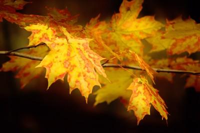 Fall22