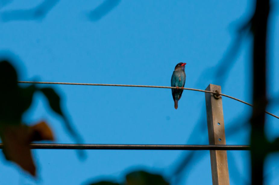 LDP- Blue Bird Day-1