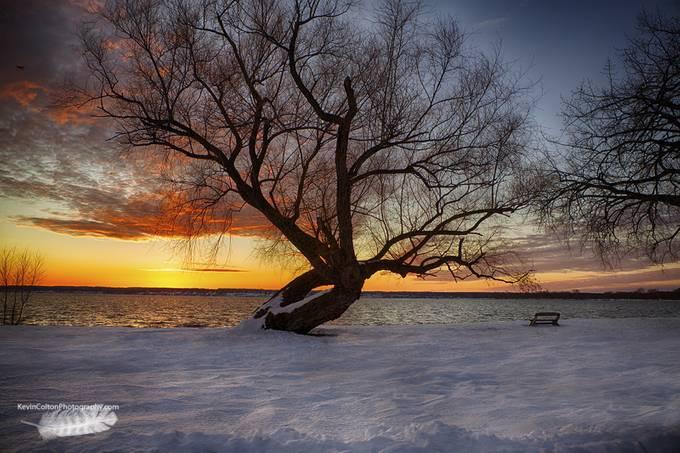 Seneca Lake120104-2 by KevinColton - Tree Silhouettes Photo Contest