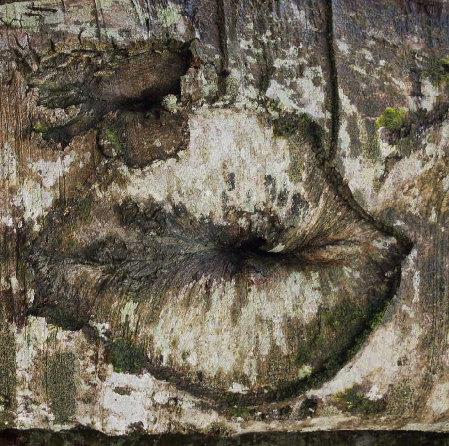 tree kisses