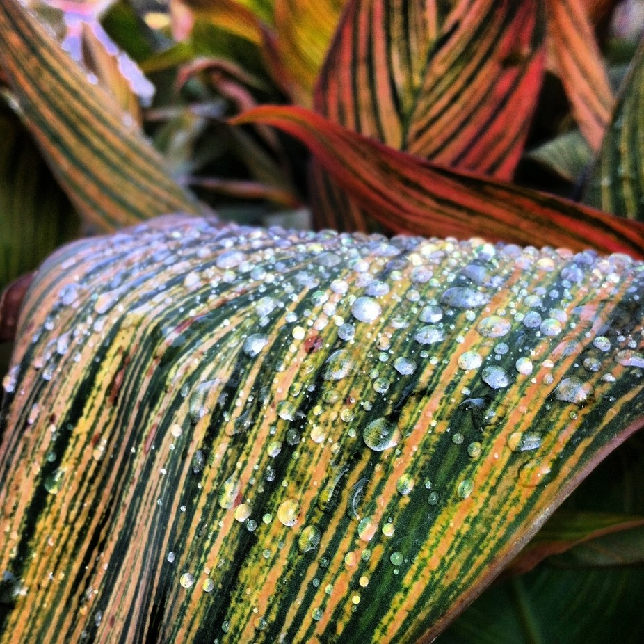 The rain had just stopped and water droplets were still fresh.