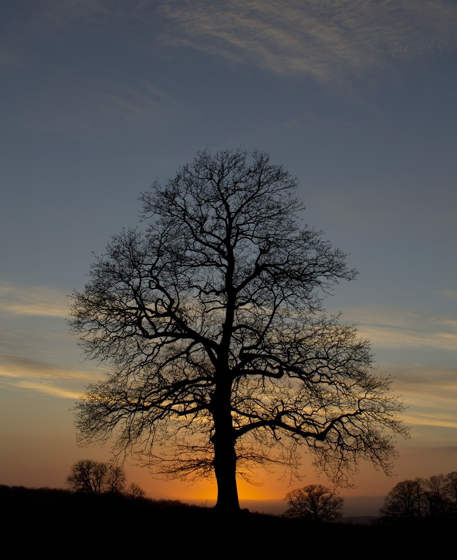 A tree stands bare on a winters evening, backlit by a beautiful colourful sunset.