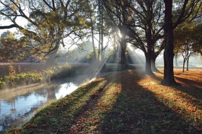 Heathcote Rays
