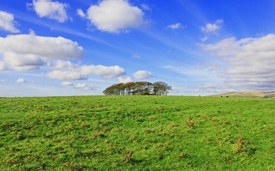 A Clump of Trees, Dartmoor