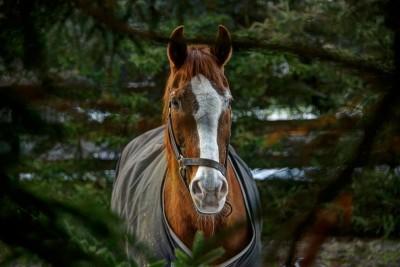 Spy Horse