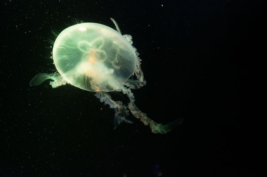 Jellyfish 1760