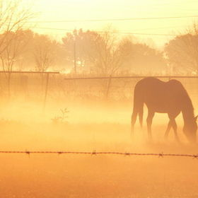 Horses at dawn in the fog