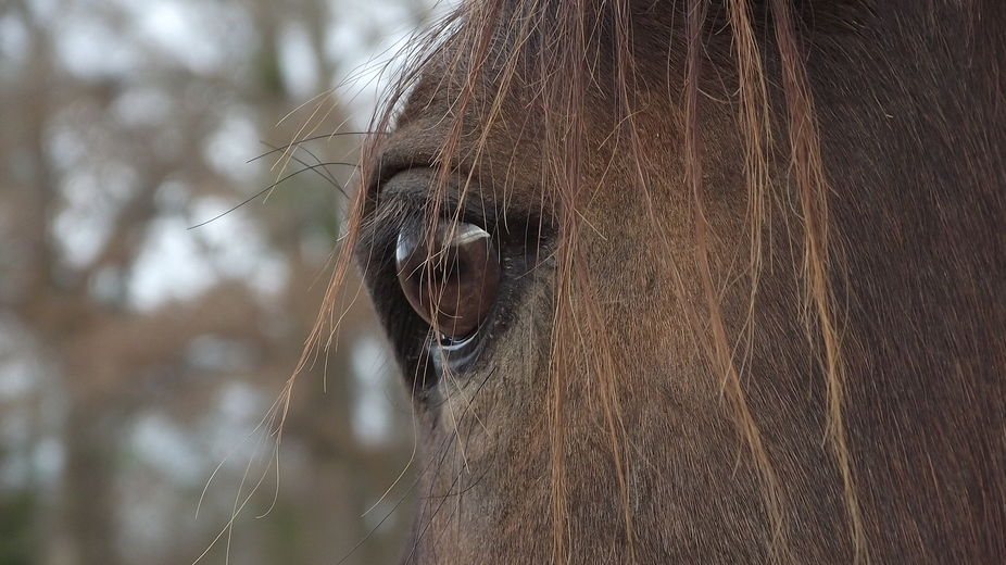 This is a photo of my horse\'s eye.