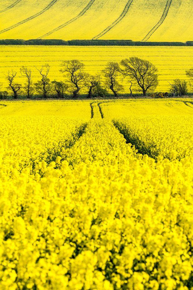 Spring Fever Photo Contest Winner