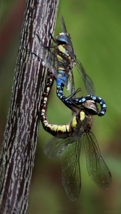 viewbug - sue martin drgonflies Jan 13