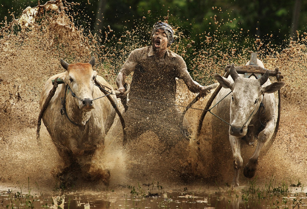 Action Photography Contest Winners Blog ViewBugcom