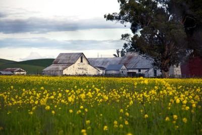 Farm Behind Mustard in Spring IMG_0013