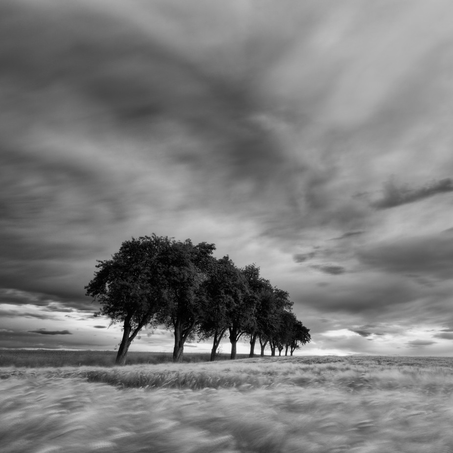 In The Line by HenrikSpranz - Black And White Landscapes Photo Contest