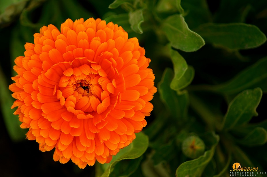 Beautiful Orange