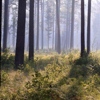Croatan Forest NC