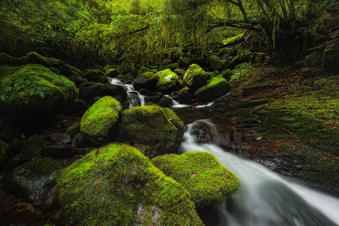 Lush Tranquility by DrewHopper - Streams In Nature Photo Contest