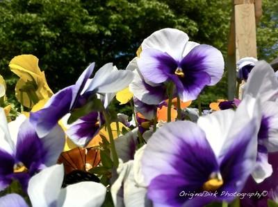 Iphone Flowers