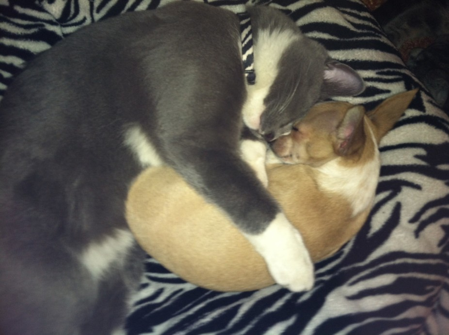Edward and Jeniveve falsify the old stereotype that dogs and cat don\'t get along :)