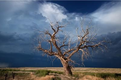 Hundred Year Tree, La Junta, Colorado