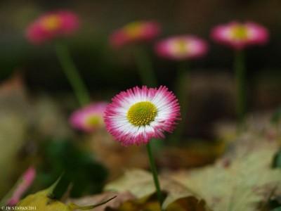 Floral Chorus
