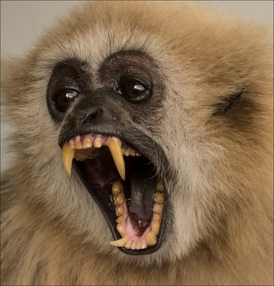 Lars Gibbon with fearsome mouth