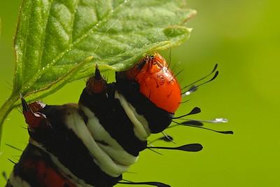 Caterpillar Dinner