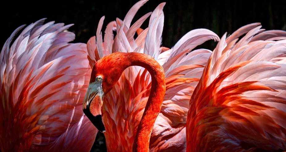 i waited about an hour and took over 100 shots to get this one, i wanted the Flamingo\'s head with...