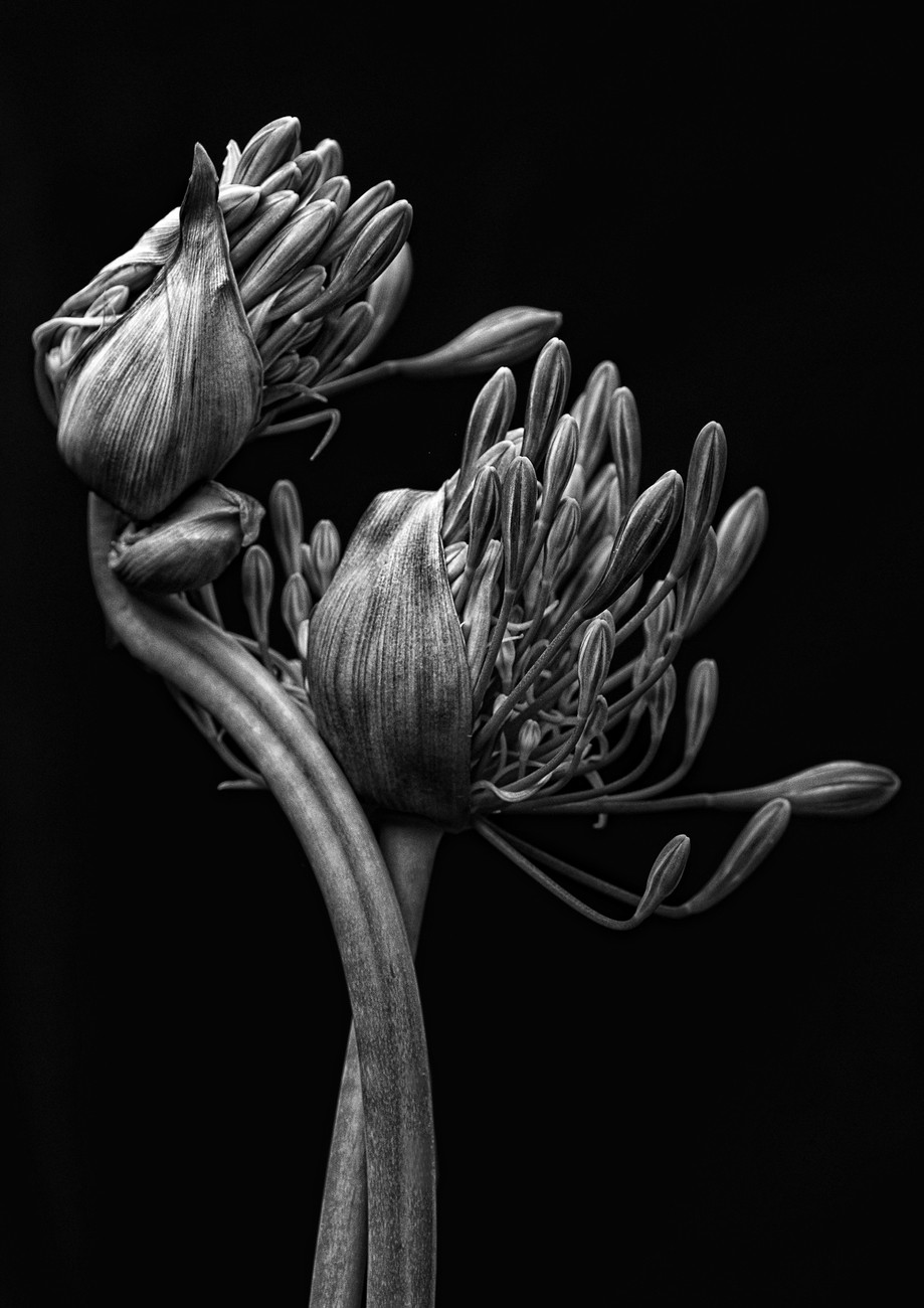 Flowers In Black And White Photo Contest Winners Blog Viewbug