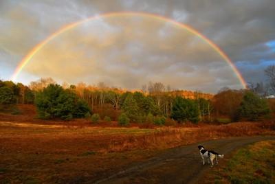 Dog of a Rainbow