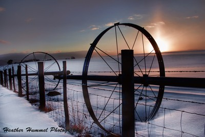 Row of Irrigation Wheels at Sunrise