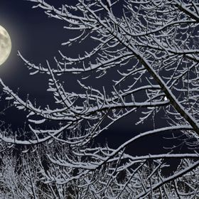 Snow covered trees illuminated by full moon