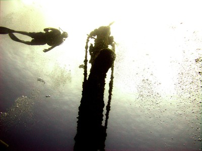 Roatan dive
