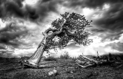 Twisted Tree I