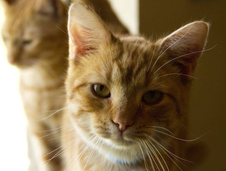 I volunteer time each week to help out my counties animal shelter.  Cats are my favorite!  These ...